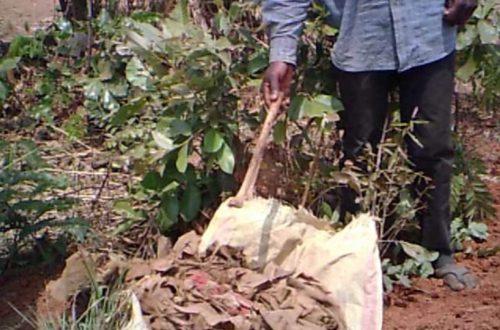 Article : On déloge des morts de leurs tombes à Lubumbashi