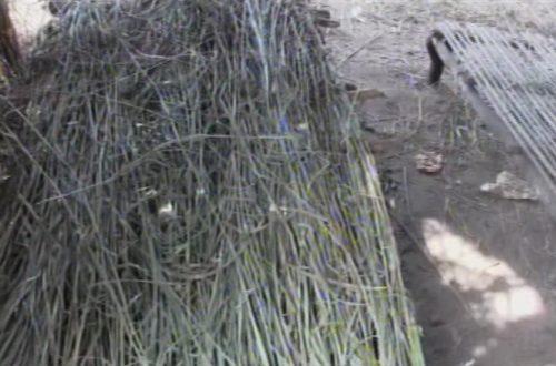 Article : Les lits en pailles pour les malades de choléra au Katanga