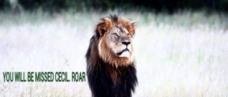 Article : #CecilTheLion : quand la mort d'un lion supplante celle d'un homme